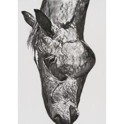 Sadacat - grafică în cărbune pe hârtie, artist Edmona
