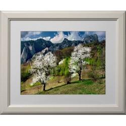 Miresme de primăvară - fotografie, artist Radu Pop
