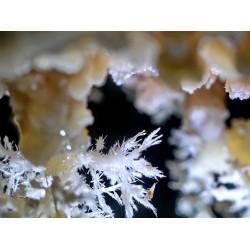 Bolți înflorite- fotografie, artist Radu Pop