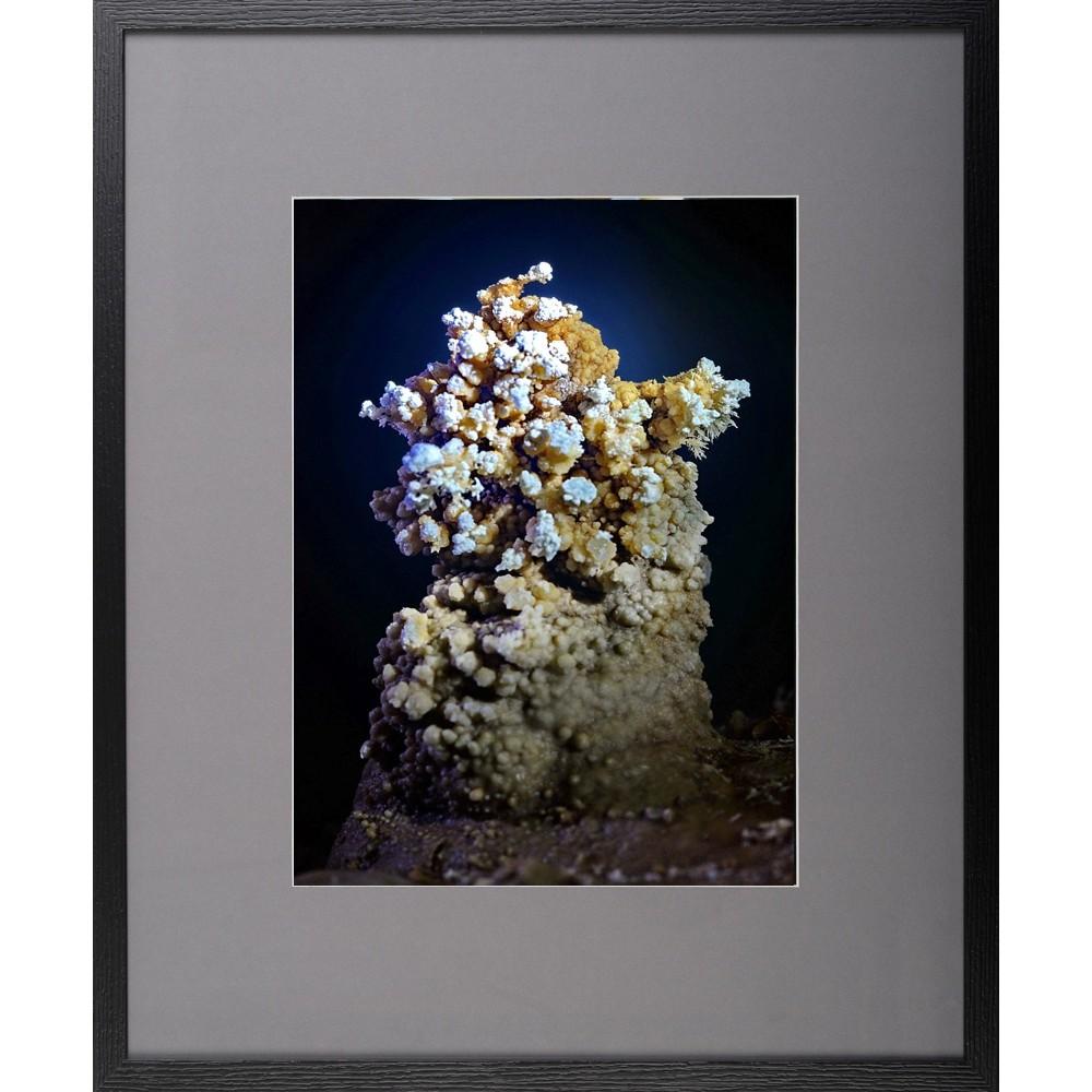 Brăduțul - fotografie, artist Radu Pop