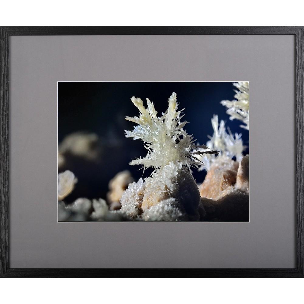 Floarea albă - fotografie, artist Radu Pop