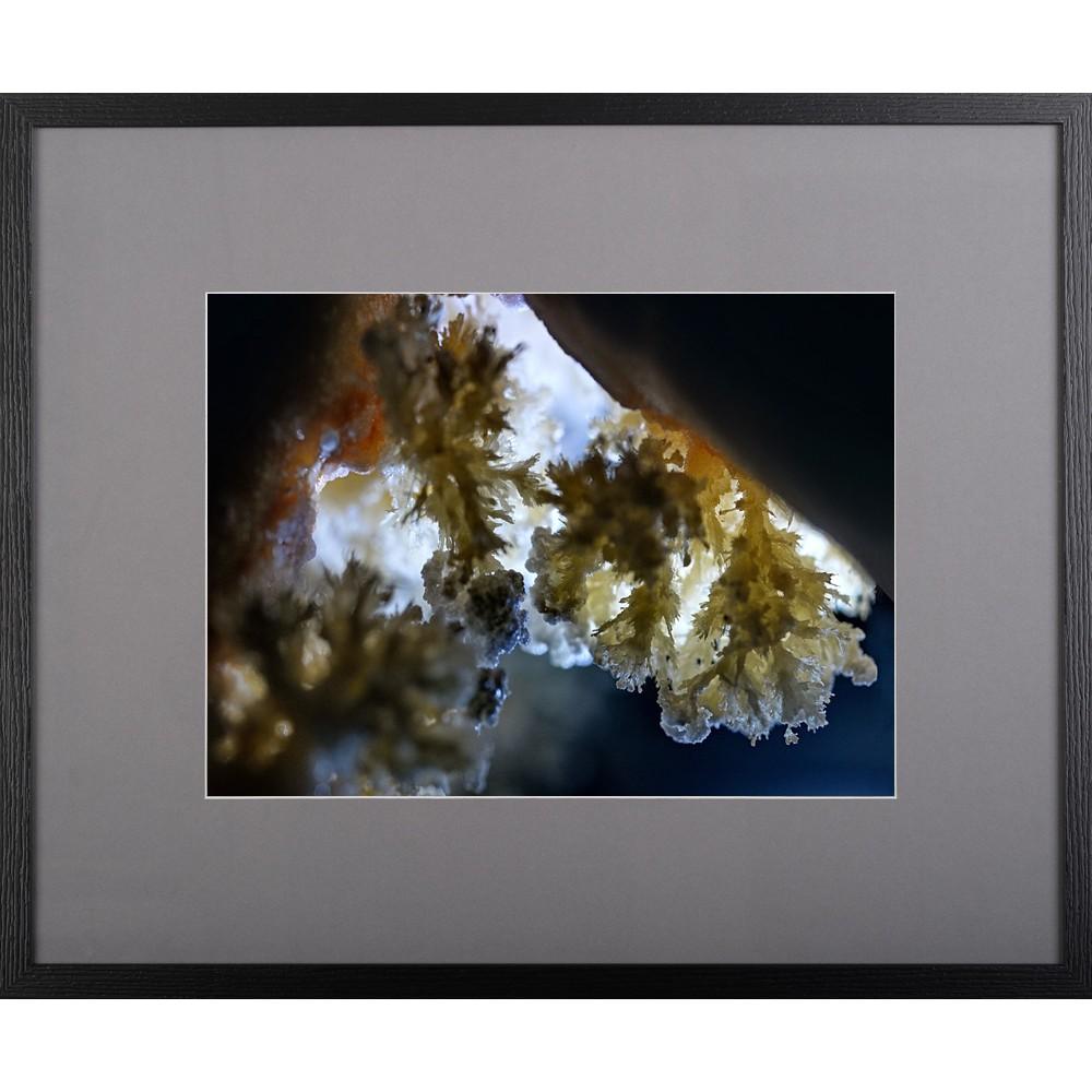 Triumful grăuntelui - fotografie, artist Radu Pop
